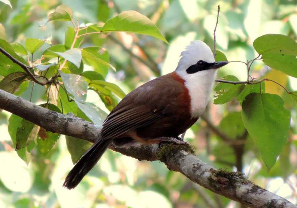 Bird watching in Uttarakhand