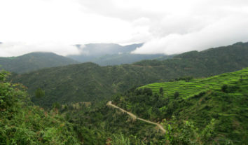 Himalayan jungle view