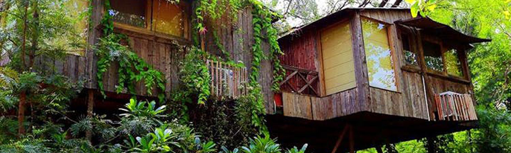 tree house in Bhimtal